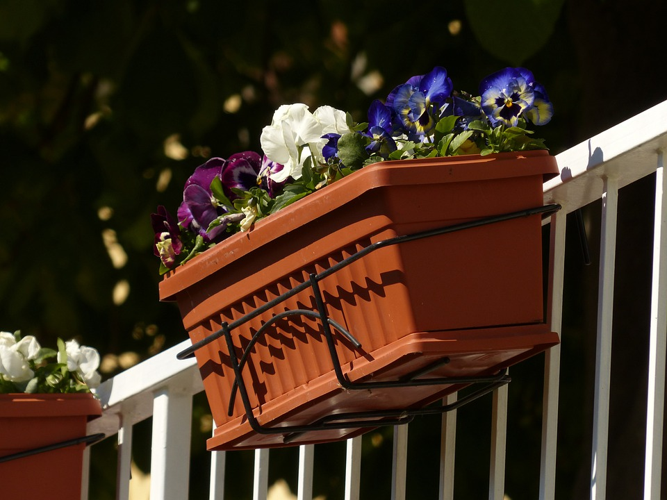 Free photo balcony plants flower box pansy free image for Balcony flowers