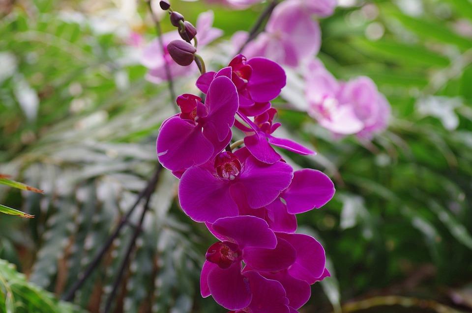 Orchidea Wild Orchid Kvet - Fotografia zdarma na Pixabay e8a02820056