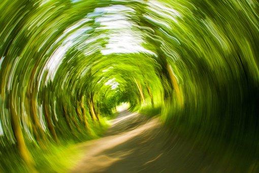 木, 離れた, 自然, 渦, オフ, 目まいがする, 倒れる, シュトルーデル