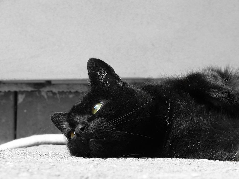 4400 Koleksi Gambar Hewan Kucing Batu HD Terbaru