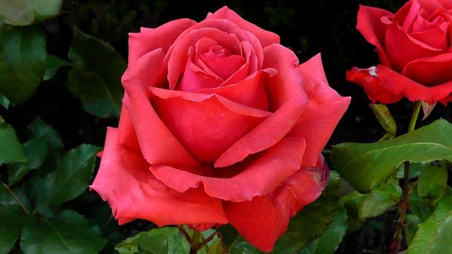 Rote Rosen Forum Kommentare