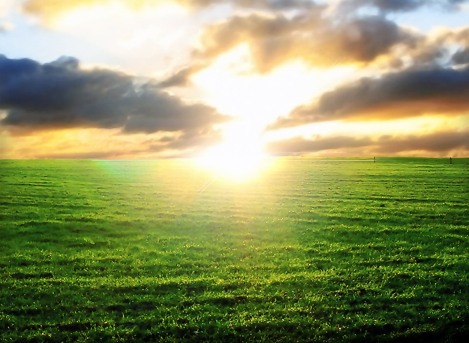 Free Photo Sunset Plants Landscape Sun Sky Free