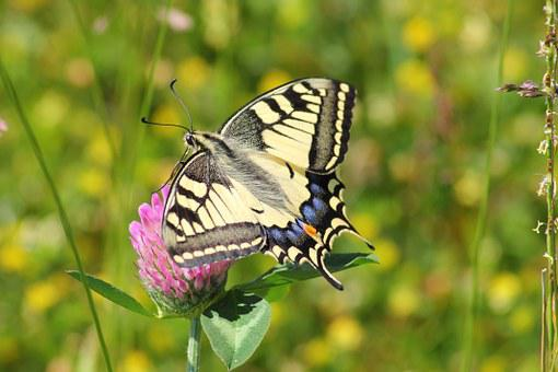 20 000 Butterfly Pictures Images Hd Pixabay