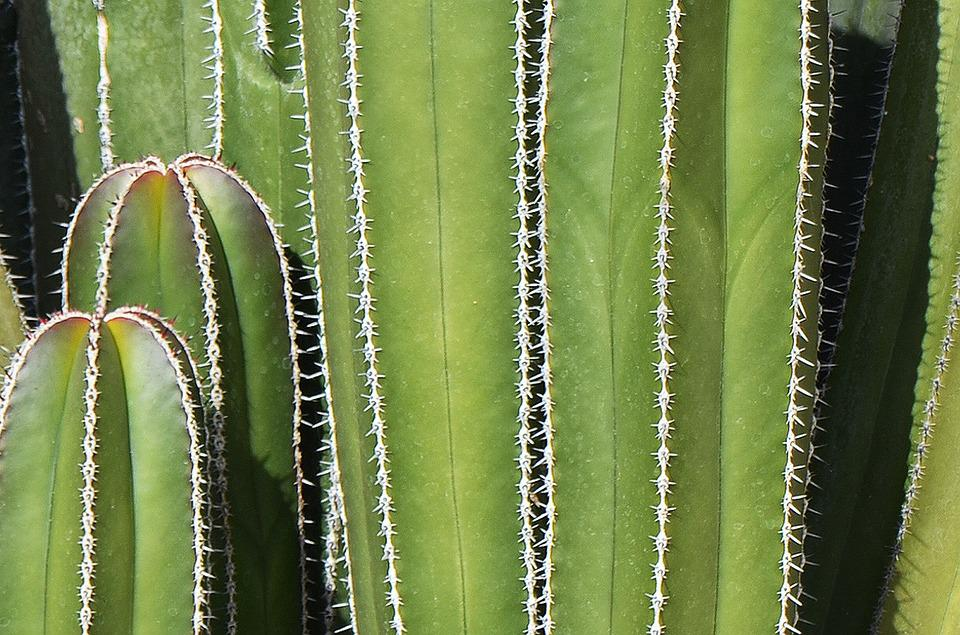 Free Photo Cactus Mexican Background Thorns Free