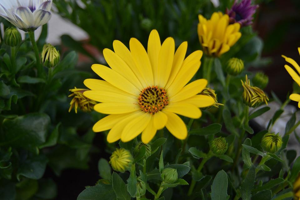 Photo gratuite fleur jaune champ plante t image for Plante jaune