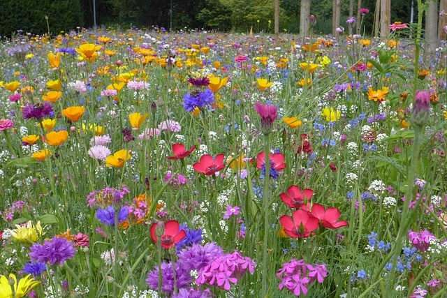 gratis foto blomster228ng sommaren gratis bild p229