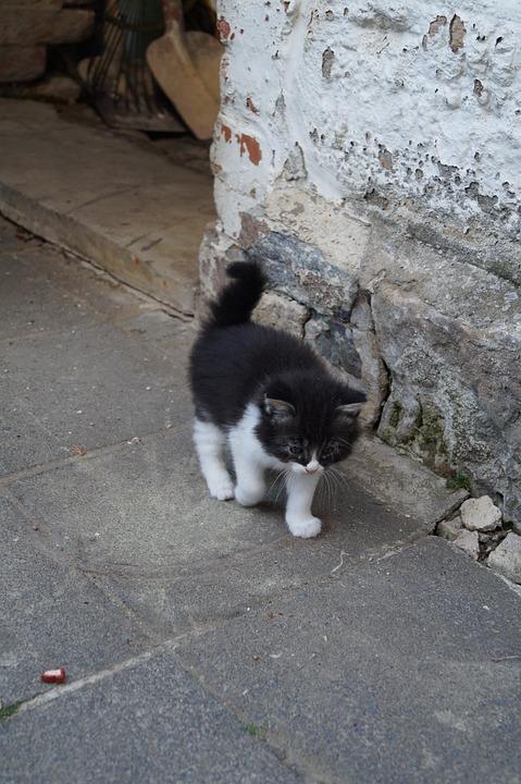 Černá kočička matka