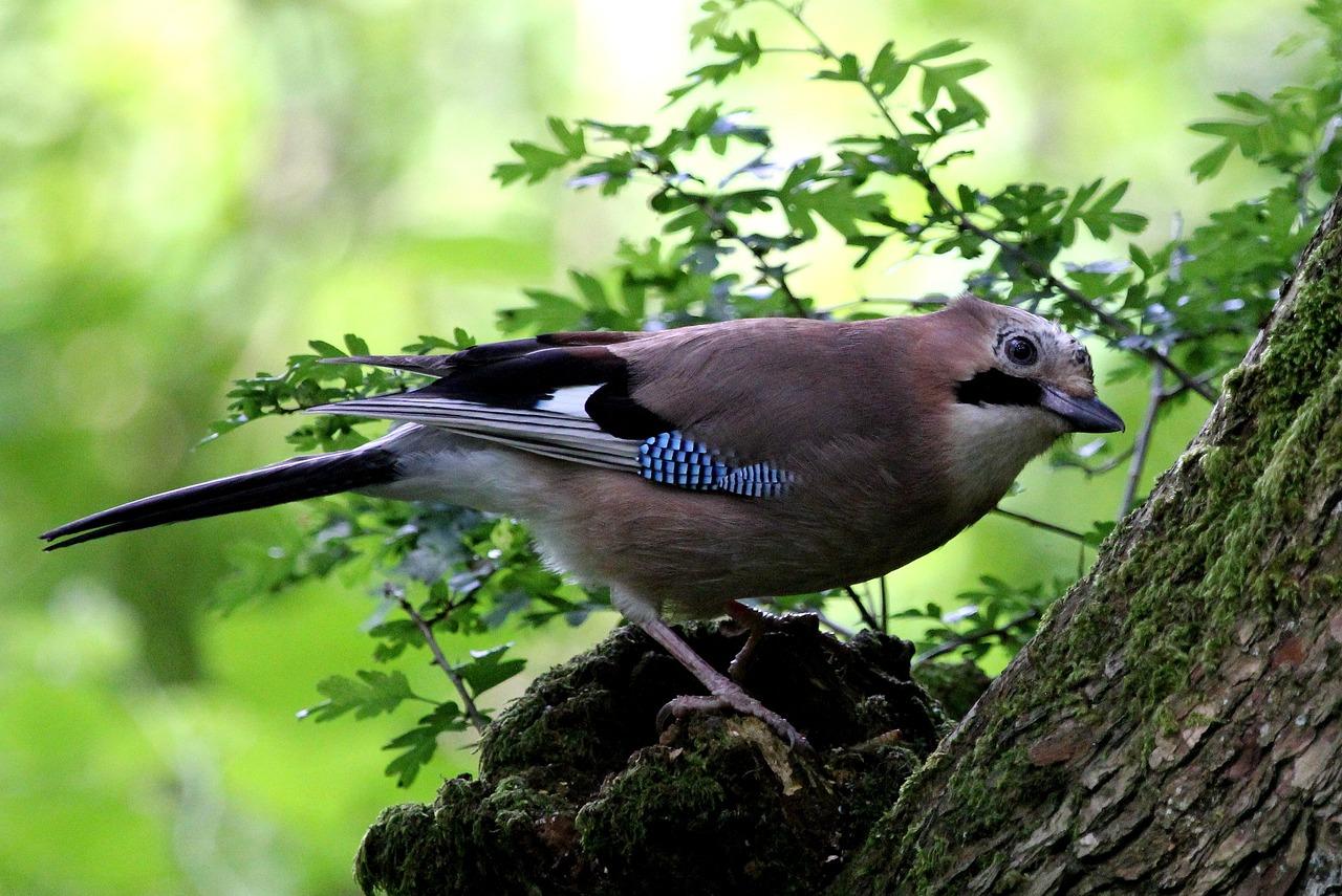 Картинки птички лесные