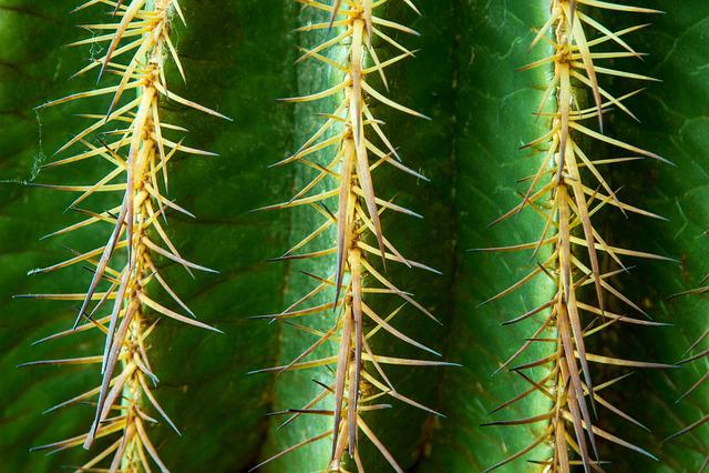 Cactus Spur Thorns · Free photo on Pixabay
