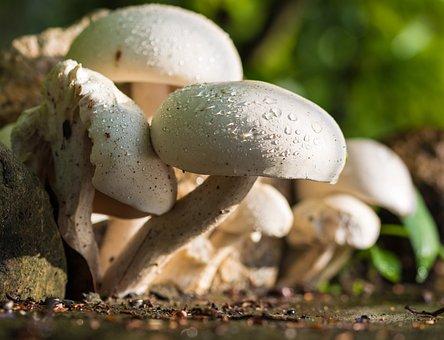 Mushroom, Nature, White, Raindrop