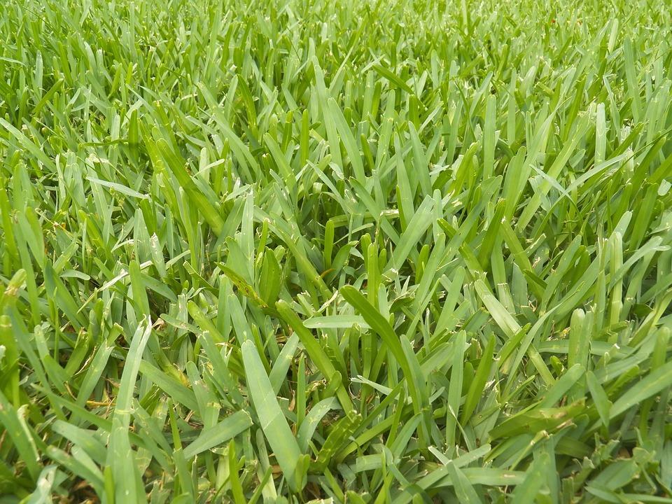 Herbe pelouse vert photo gratuite sur pixabay for Recherche tonte pelouse