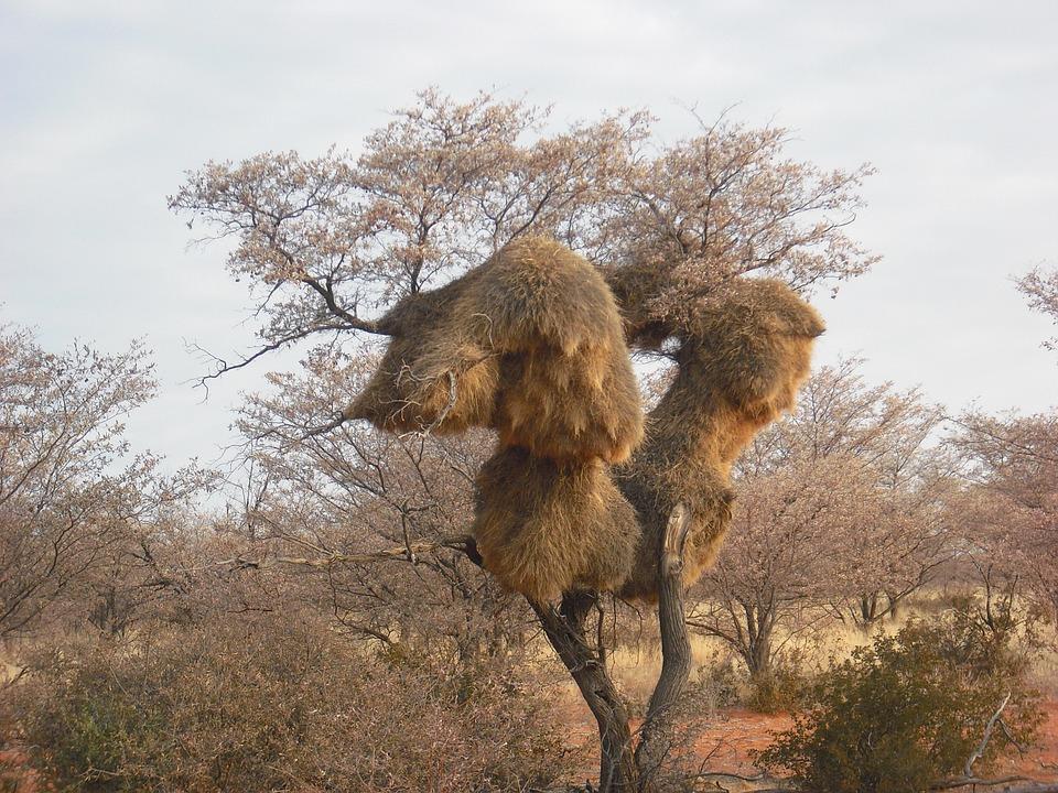 Photo gratuite baobab afrique arbre image gratuite sur pixabay 372775 - Arbre africain en 7 lettres ...