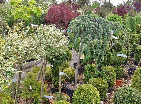 Nursery, Flower Trade, Plant Trade