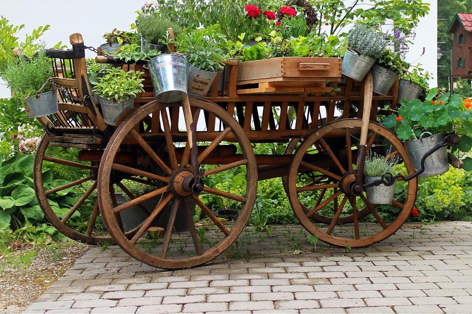 Garden, Deco, Cart, Dare, Flowers, Plant, Bucket