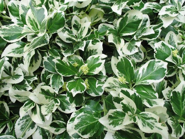 Bush Ornamental Plant Garden · Free Photo On Pixabay