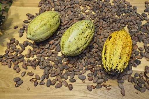 Avant le chocolat, il y a la fève de cacao