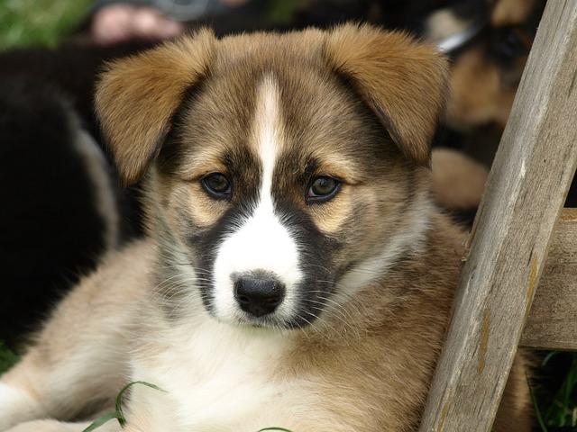 Puppy Young Dog Hybrid 183 Free Photo On Pixabay