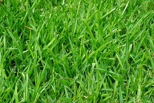 Grass, Rush, Juicy, Green