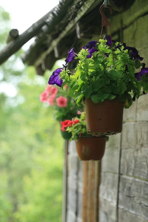 Doniczka Roślina Doniczkowa Kwiaty Darmowe Zdjęcie Na Pixabay