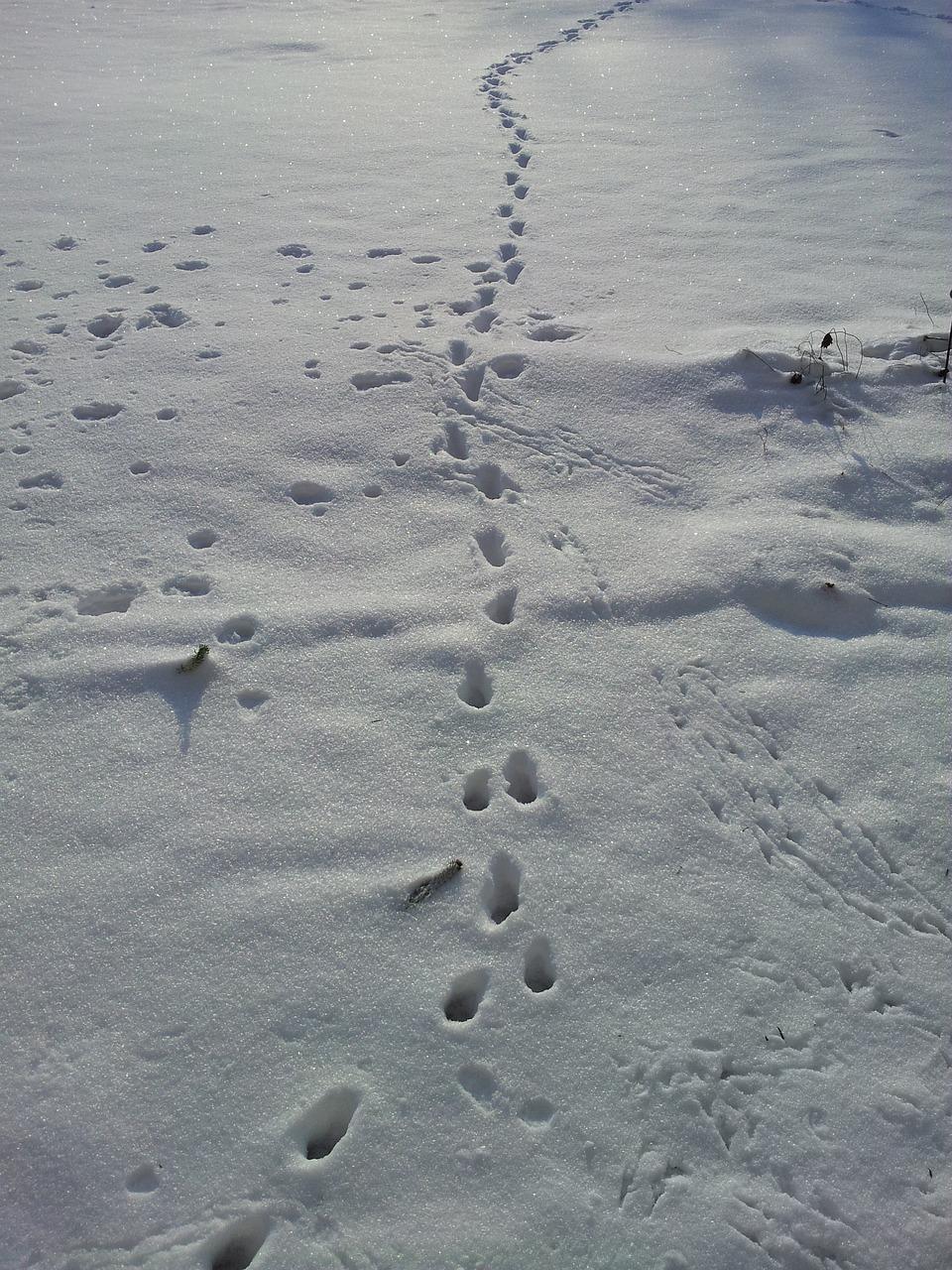 Afbeeldingsresultaat voor snow athletics