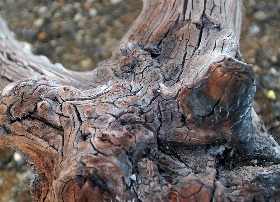 Wurzel Baum Holz Kostenloses Foto Auf Pixabay