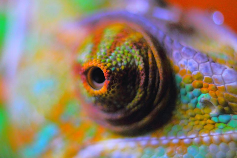 chameleon abstract · free photo on pixabay