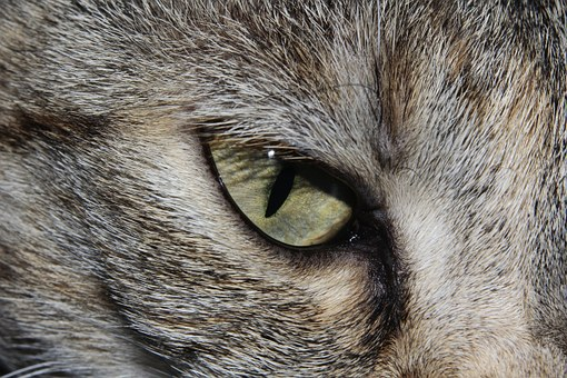 Cat, Cat'S Eye, Close, Cute, Beautiful