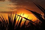 sunset, sun, evening