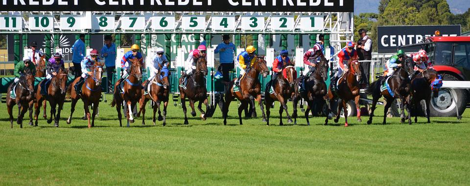 Horses, Racing, Jockey, Sport, Rider, Track
