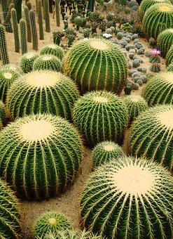 インテリアに自然を~多肉植物~