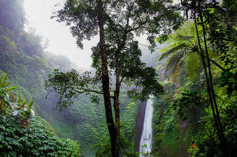 Chute D'Eau, Forêt Tropicale Humide, Des Forêts, Nature