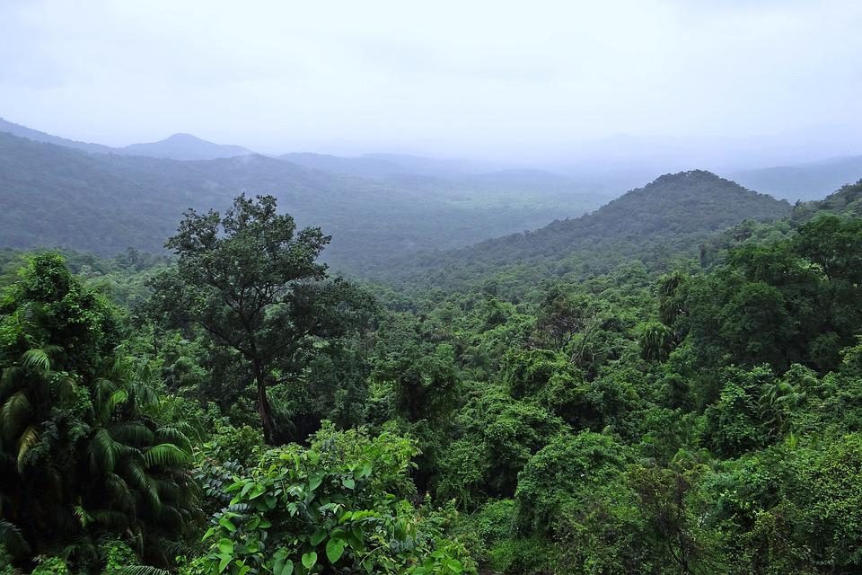 amazon-Rainforest-facts-stats