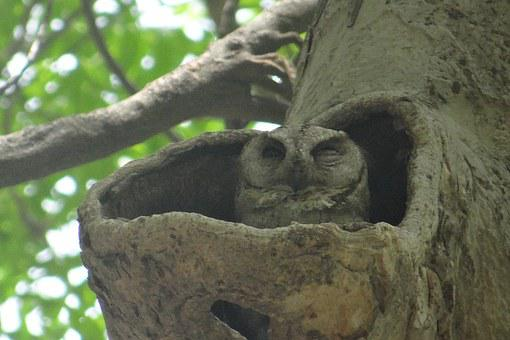 Indian Scops Owl to mean Online value proposition 2: Find your one best target niche and focus on it