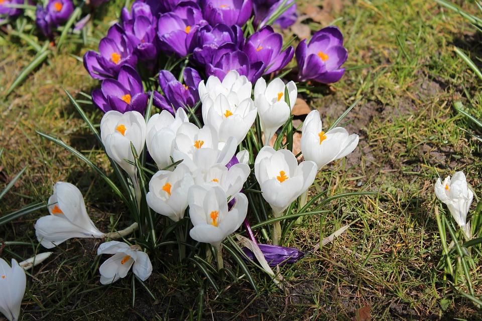 photo gratuite fleurs printemps paysage t image gratuite sur pixabay 385871. Black Bedroom Furniture Sets. Home Design Ideas