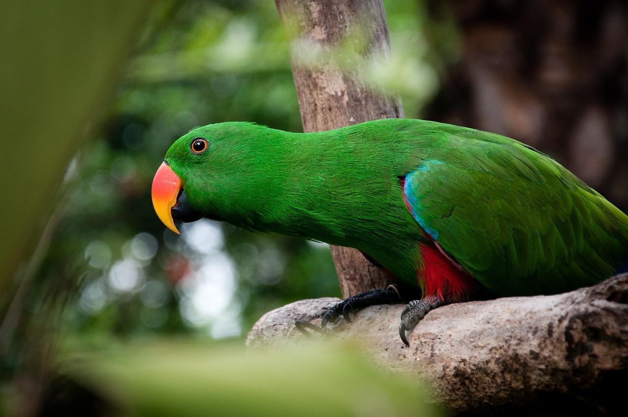 Фото попугай птицы