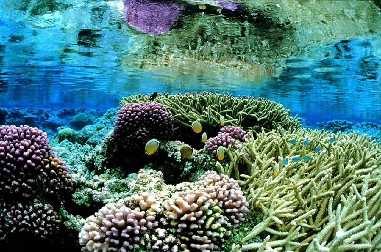 an overview of the coral reefs The reef crest is the shallowest part of the reef, and the narrowest of the 3 major zones that make up coral reef ecosystems it lies between the shoreward, protected lagoon and the outer reef face it lies between the shoreward, protected lagoon and the outer reef face.