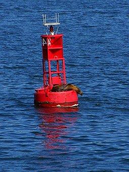 It, Seal, Bay, San Diego, Bouy, Bouy
