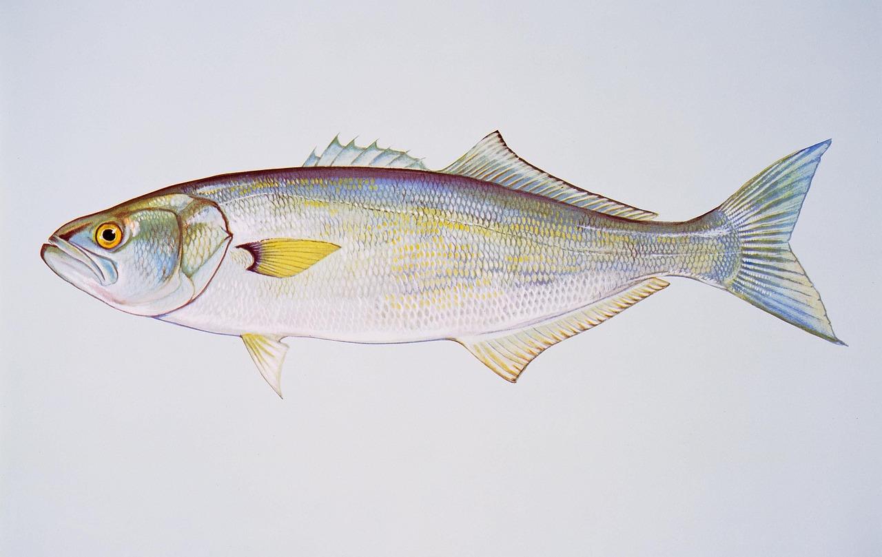 коэффициент луфаревые рыба фото солнечной системы