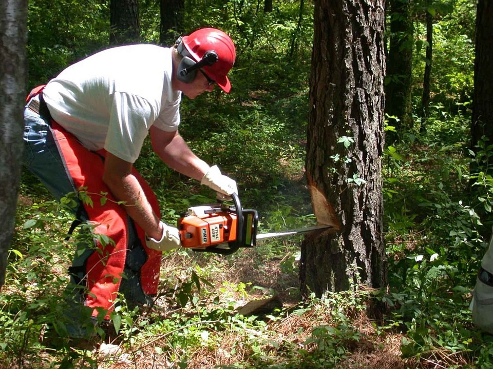 Forest, Chainsaw, Holds, Man, Men, Male, People