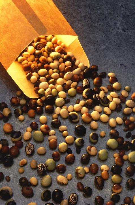 graines plantes gratuites