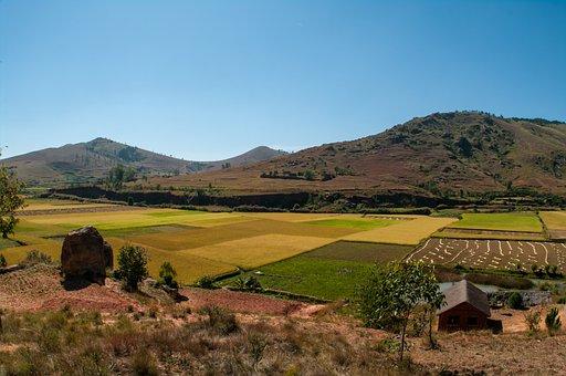 田舎, マダガスカル, 田んぼ, 伝統的な, 農業, 農村, 緑, 風景, 植物