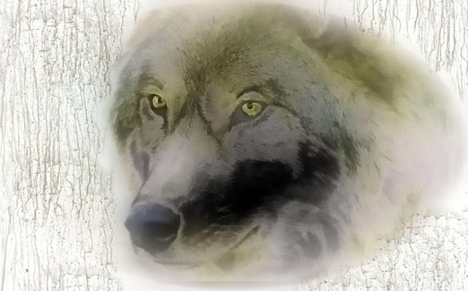Vlk Zlo Nocni Mura Obrazek Zdarma Na Pixabay