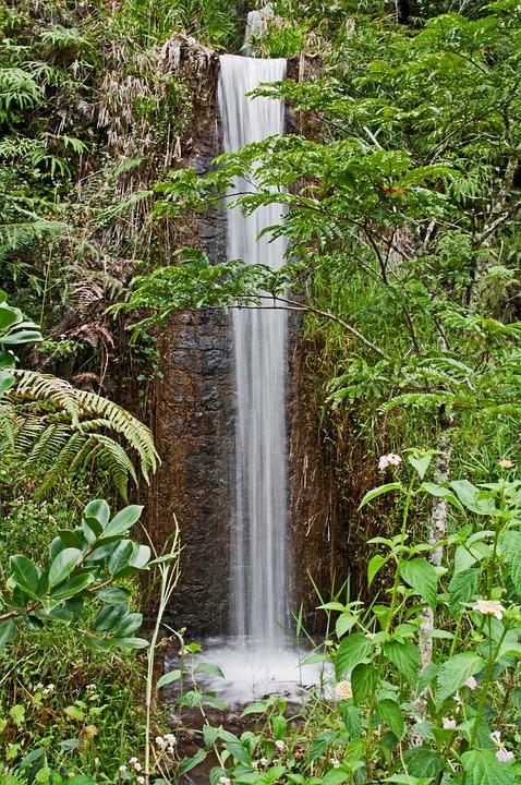 Petites Chutes, Parc National, Madagascar, La Forêt