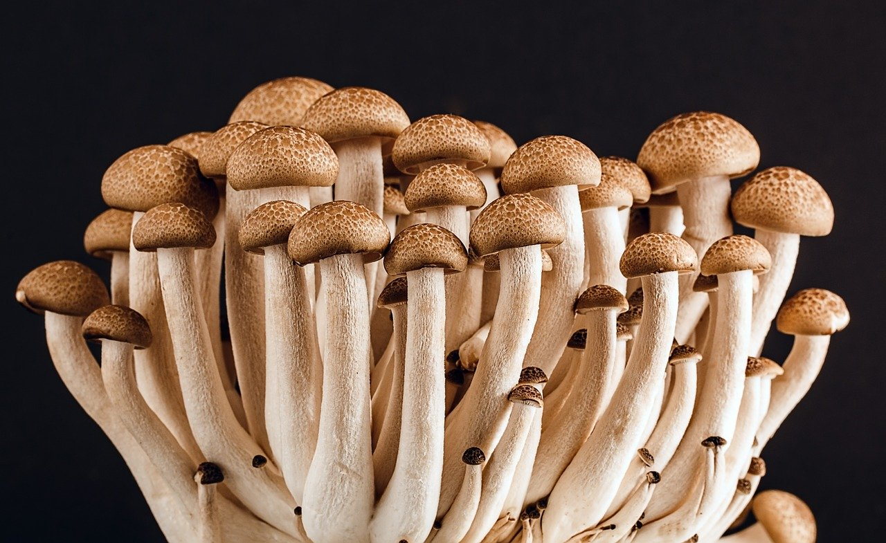 buy magic mushrooms uk