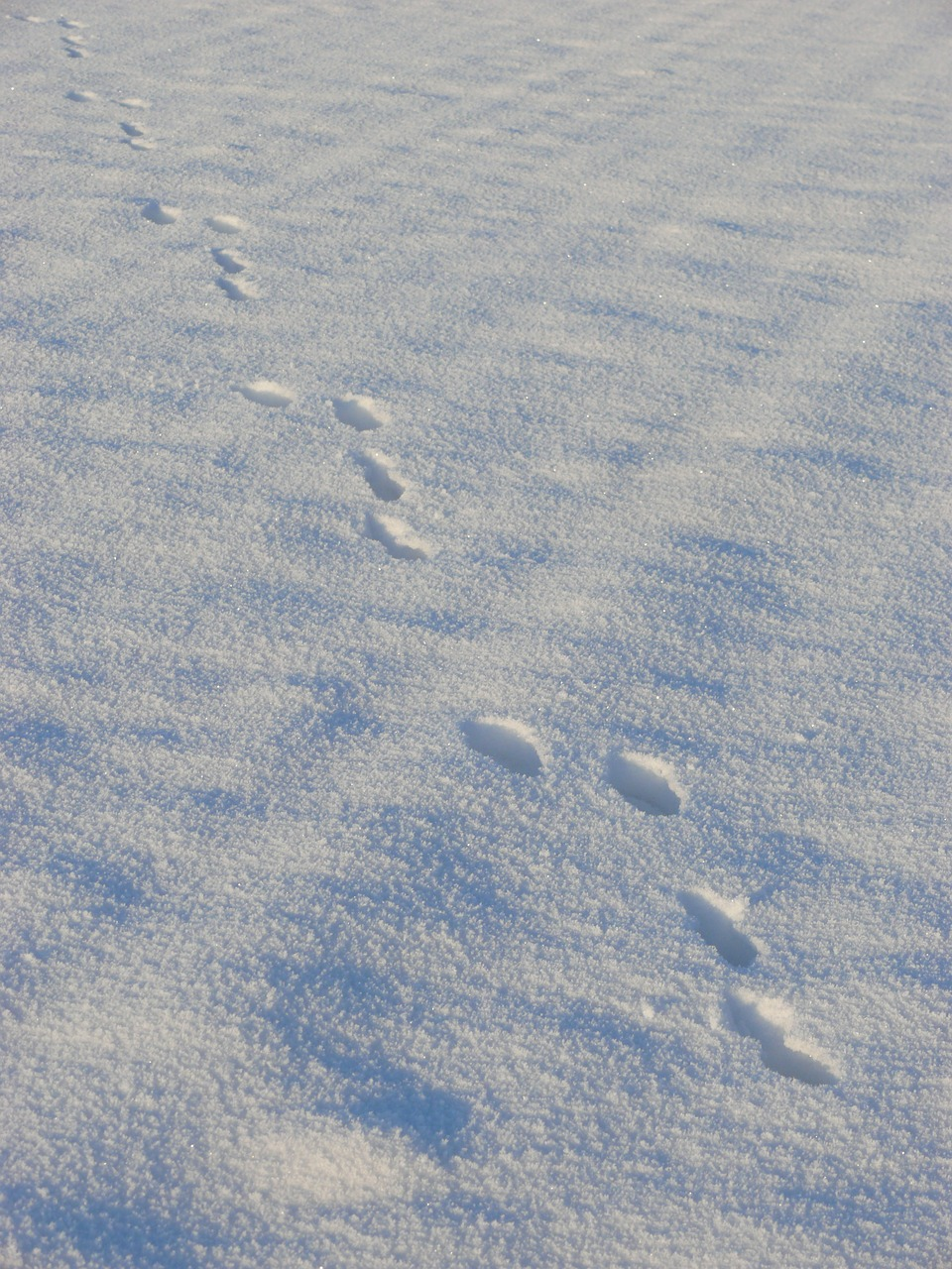 результате получается следы на снегу мужчины фото оговорюсь