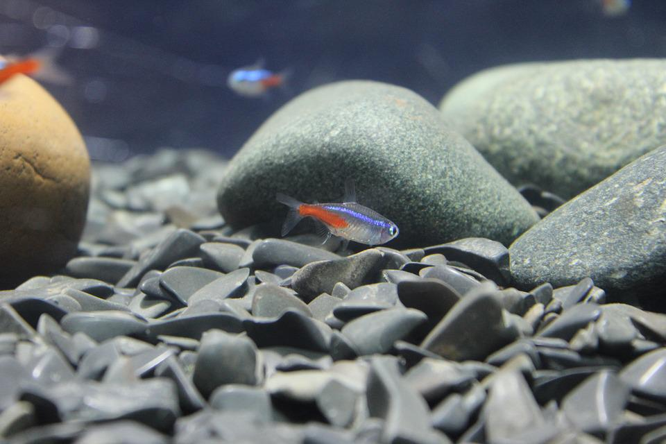 Ryb, Kamienie, Małych, Piętro, Akwarium