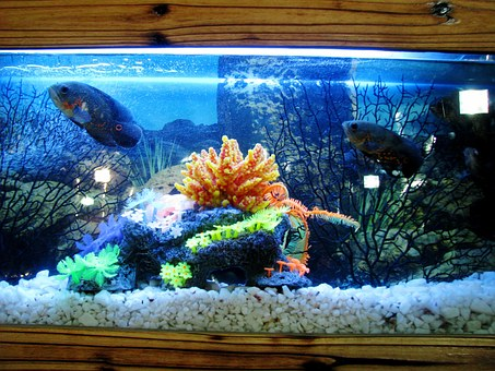 Aquarium, Fish Tank, Fish, Water