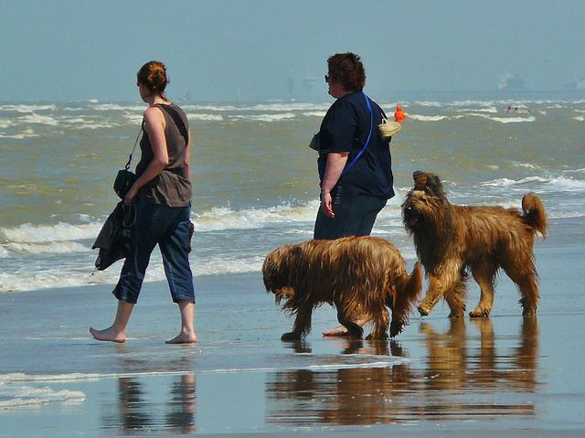 Beach, Walk On The Beach, Sea, Wave, Dogs, Human