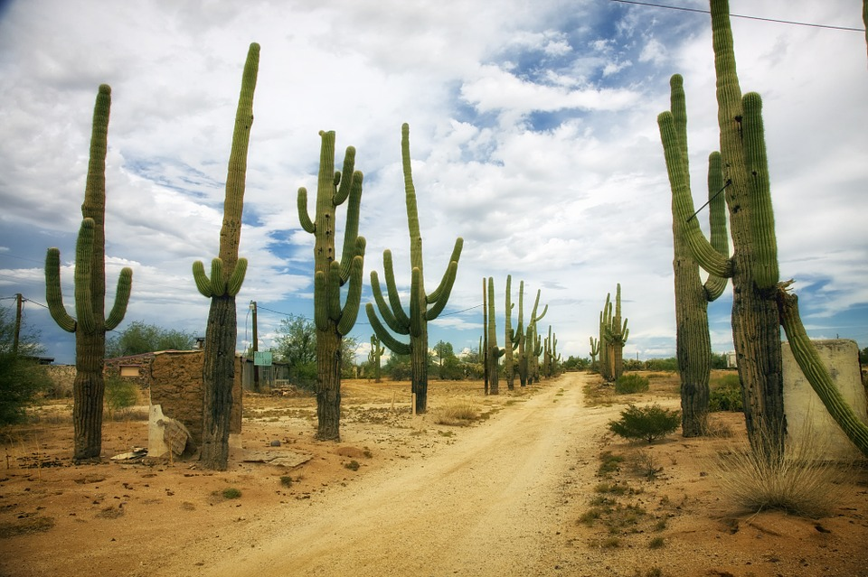 free photo desert catus cacti dirt road free image