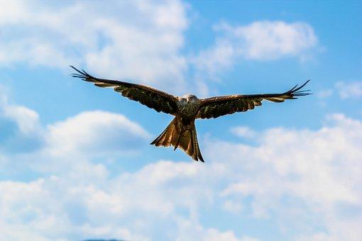 Flug, Adler, Birds